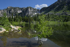 Lower Bloomington Lake Royalty Free Stock Photos