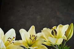 Lower border of fresh lemon yellow day lilies stock photo