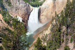 Lower Falls in the Grand Canyon of the  Yellowstone, Wyoming Royalty Free Stock Image