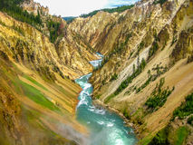 Lower Falls in Yellowstone Royalty Free Stock Image