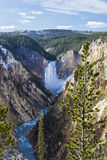 Lower Falls of the Yellowstone River Stock Image