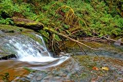 The Lower McDowell Creek, Oregon Royalty Free Stock Photos