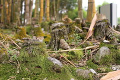 Lower Part of Cut Bamboos (Bambusae) Stock Photo