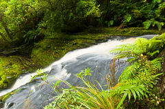 Lower part of Mac Lean Falls in the Catlins Stock Image