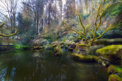 Lower Pond at Portland Japanese Garden Royalty Free Stock Photos