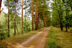 Lower Silesia forests Stock Photo