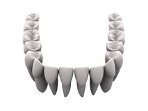 Lower teeth 1. Lower teeth in white. Easy to isolate vector illustration