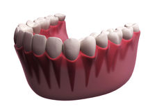 Lower teeth Royalty Free Stock Photos