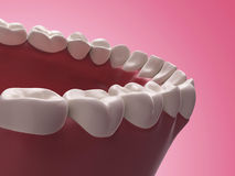 Lower teeth. 3d rendered illustration - lower teeth Royalty Free Stock Photo
