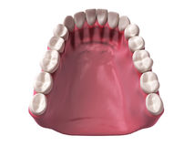 Lower teeth Stock Photos