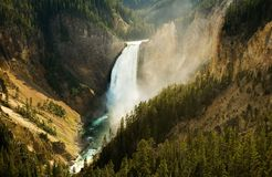Lower Yellowstone Falls Royalty Free Stock Photography