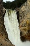 Lower Yellowstone Falls Royalty Free Stock Photo
