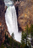 Lower Yellowstone Falls Stock Image