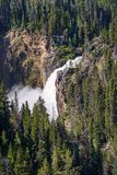 Lower Yellowstone Falls in Yellowstone National Park, Wyoming. Grand Canyon of Yellowstone Stock Images