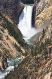 Lower Yellowstone Falls Wyoming Royalty Free Stock Image