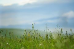 Lowering meadow Royalty Free Stock Photography