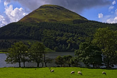 Loweswater and sheep Royalty Free Stock Photos