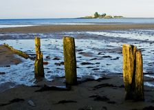 Lowtide in Maine Fotografia Stock