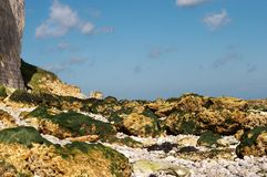 Lowtide seaweed Royalty Free Stock Images
