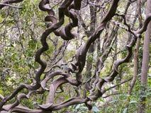 Lowveld Nationale Botanische Tuin, Nelspruit stock afbeelding