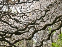 Lowveld Nationale Botanische Tuin, Nelspruit royalty-vrije stock fotografie