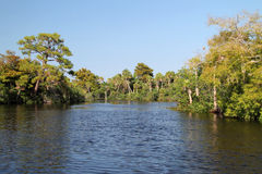Loxahatchee River Stock Image