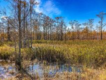 Autumn Florida Swamp. Loxahatchee Slough Natural Area Palm Beach Gardens, Florida. Swamp Landscapes and wetland fauna royalty free stock photography