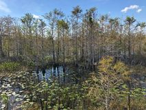Florida Swamp stock image