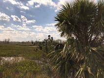 Louisiana Swamp stock images