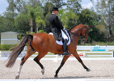 IHSPB Lars Peterson. LOXATCHEE, FL - Lars Peterson takes the blue ribbon in the Grand Prix Freestyle main event at IHS Champions Cup on March 23, 2013 in stock image