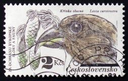 Loxia curvirostra, circa 1983 Stockbild