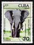 Loxodonta africana, afrikanische Fauna-Reihe, circa 1978 Stockbilder