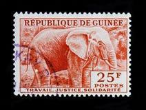 Loxodonta africana dell'elefante africano, serie, circa 1959 Immagini Stock
