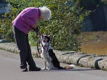 Loyal companion and best friend September 2018 stock photo