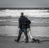 Loyal Dachshund with couple, walking on beach stock photo