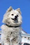 Loyal Dog Royalty-vrije Stock Foto's