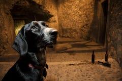Loyal dog in the street. Dog alone in historical street in Girona, Spain Stock Image