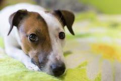 Loyal un chien Images stock
