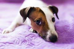 Loyal un chien Photos stock