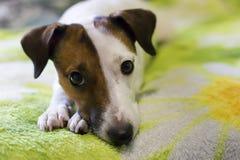 Loyal un chien Photos libres de droits