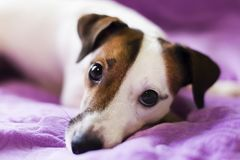 Loyal un chien Image libre de droits