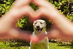 Loyalty dog Royalty Free Stock Image