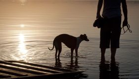 Loyalty to the owner's dog. In the lake at the evening stock photo
