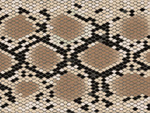 Lozenge pattern snake skin Royalty Free Stock Photo