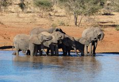 Éléphant africain Photographie stock libre de droits