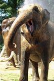 Éléphant drôle Photo libre de droits