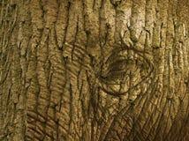 Éléphant ou arbre Image libre de droits