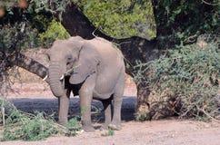Éléphants de désert Photographie stock libre de droits