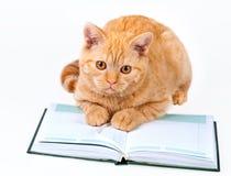 Läs- anteckningsbok för gullig affärskatt Arkivbild