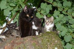 Lös katt med kattungar Royaltyfria Bilder